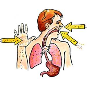 Los Quimicos Toxicos Y El Cuerpo Humano Www